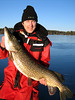 Gjedde (Esox lucius) : Misc pictures of Northern Pike